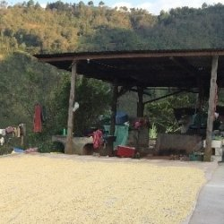 画像2: グアテマラ トゥウィハ農園